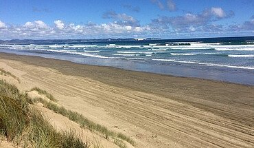 Strand Studium Neuseeland