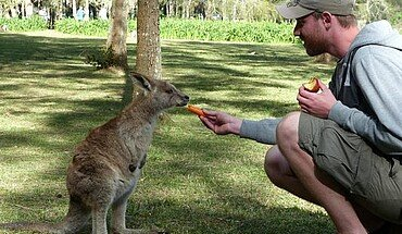 Wallabi füttern in Australien