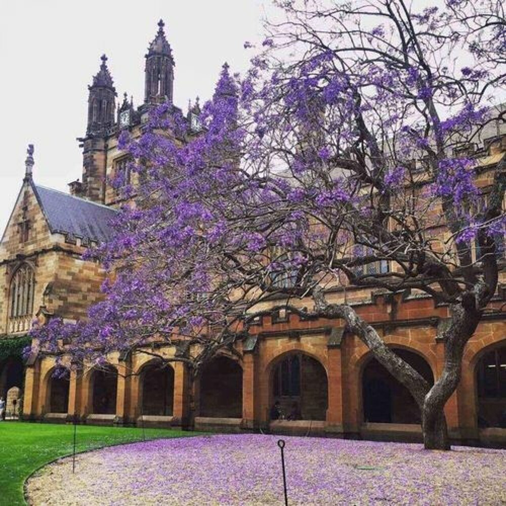 University of Sydney Quadrangle