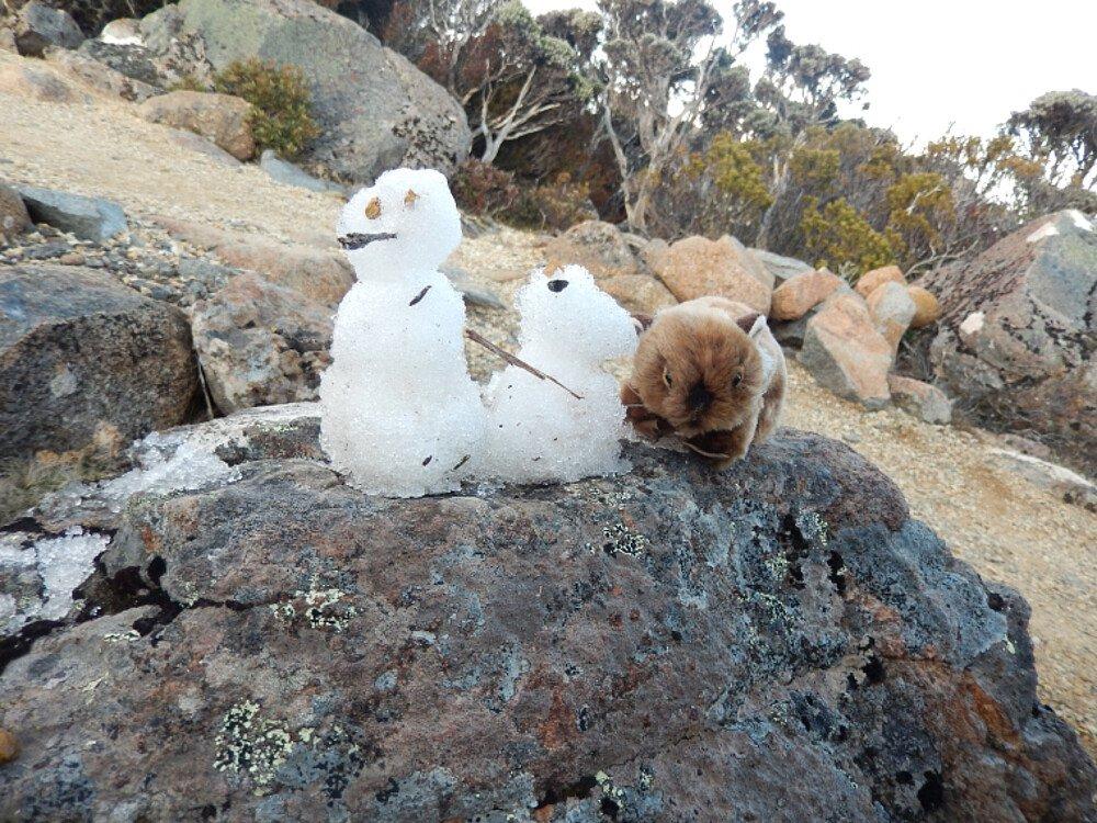 Schneeman am Gipfel von Mt Wellington - Auslandssemester