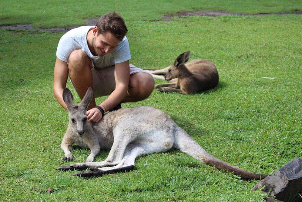 Student mit Känguruh