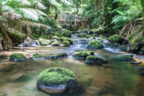 Magazin Natur Tasmanien