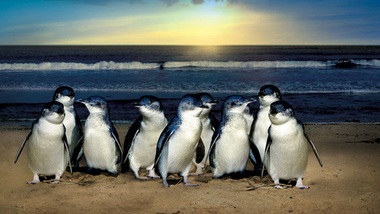 Pinguine am Strand
