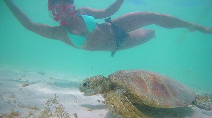 Tauchen mit Schildkröte Australien