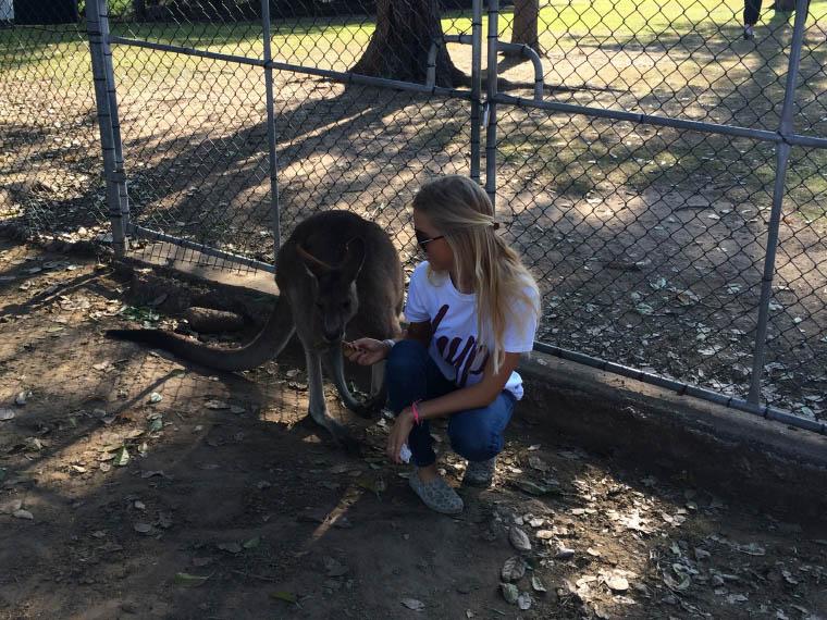 Erfahrungsbericht Auslandssemester Queensland - Känguruh