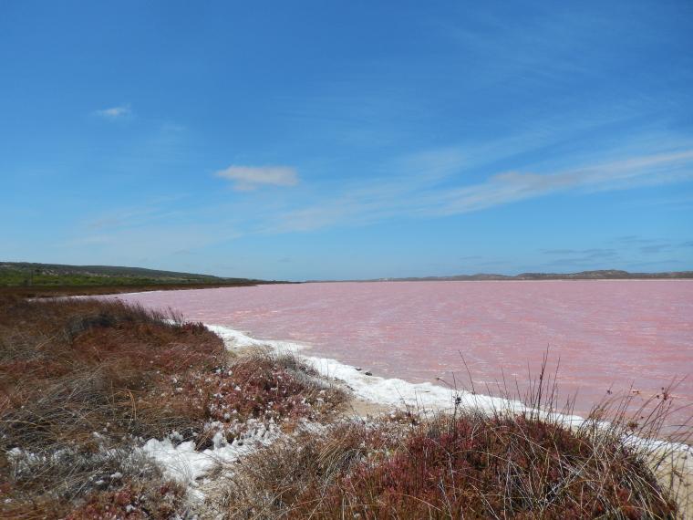 Pink Lake - Auslandssemester Australien
