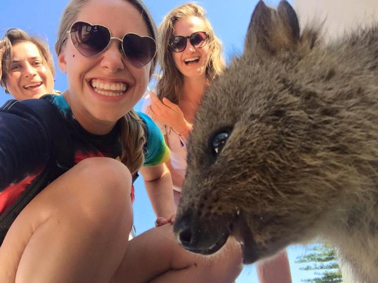 Exkursion Rottnest Island - Quokka - Auslandssemester Australien