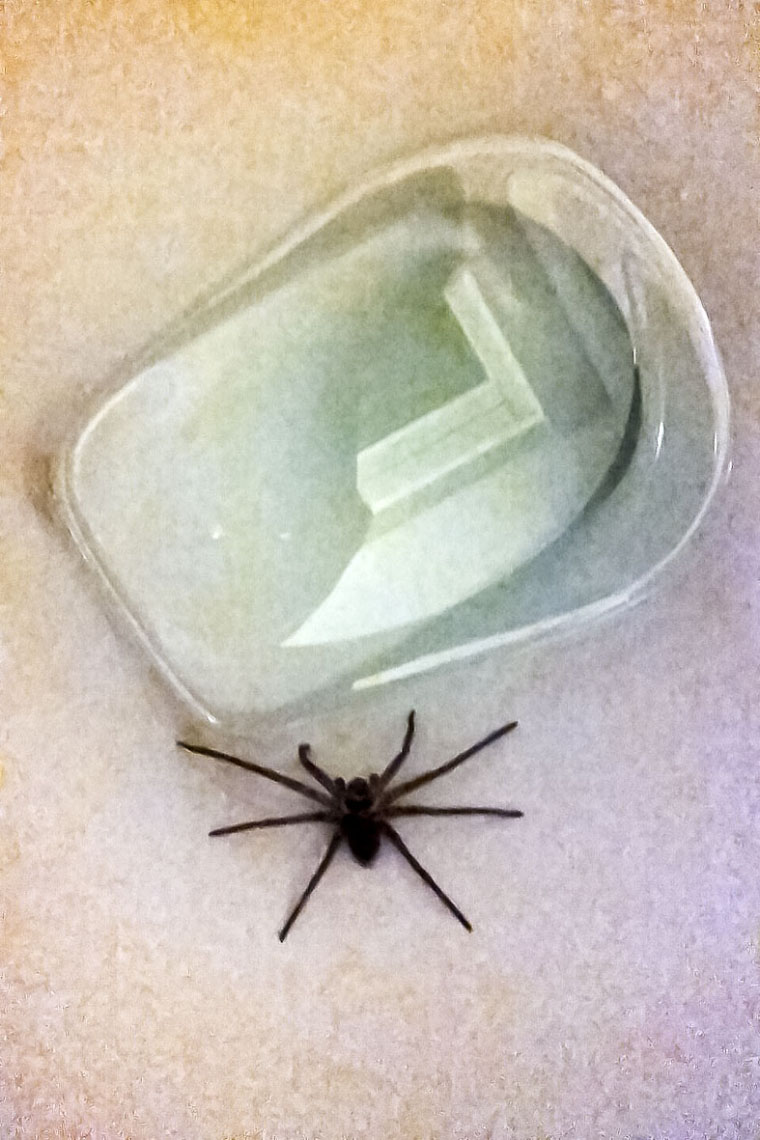 Sharing the Loo with a spider