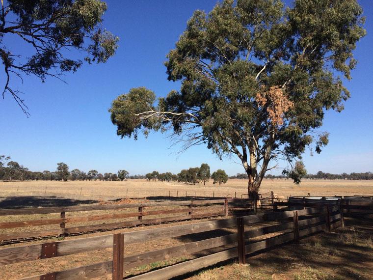 Eine Farm in Australien