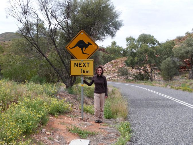 Kangaroos crossing