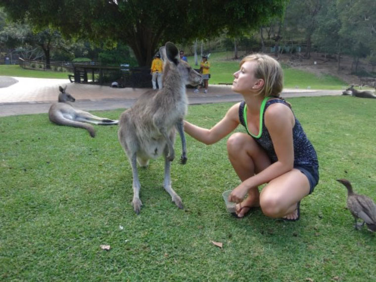 Studium in Australien - Känguru