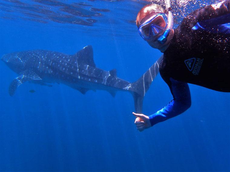 Auf Tauchgang mit Hai