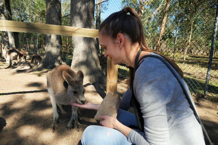 Känguruh füttern