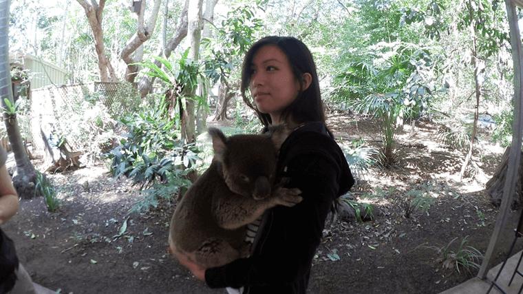 Koala Umarmung - Auslandssemester Australien