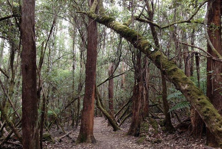 Wald in Australien