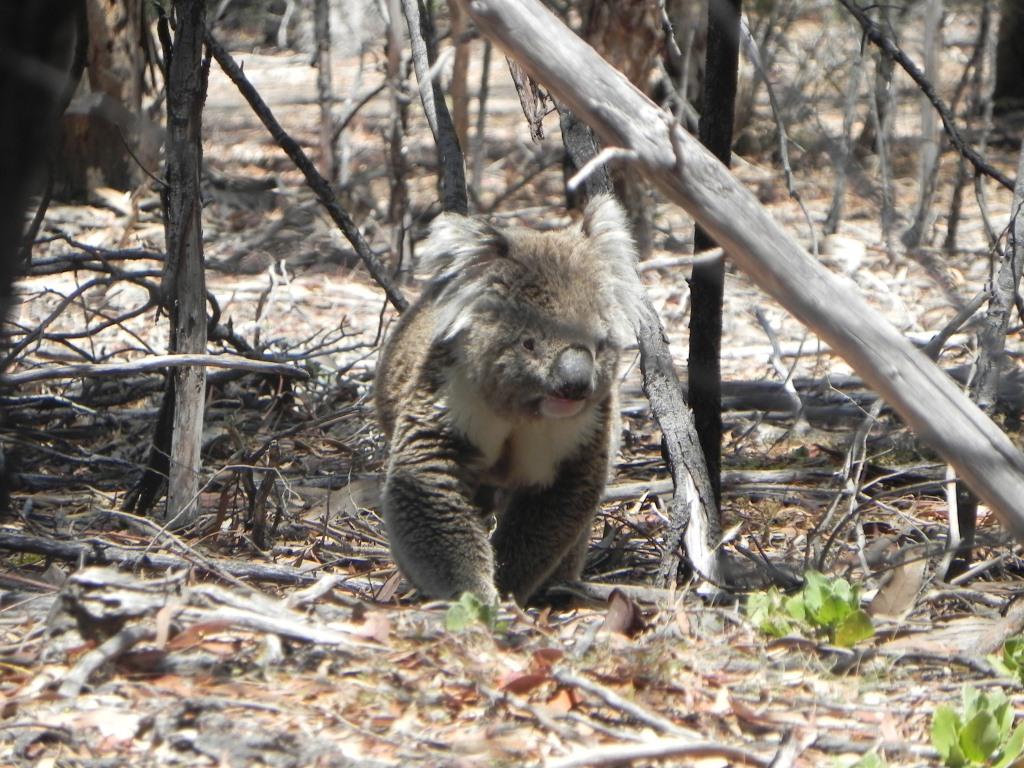 Erfahrungsbericht Link Koala