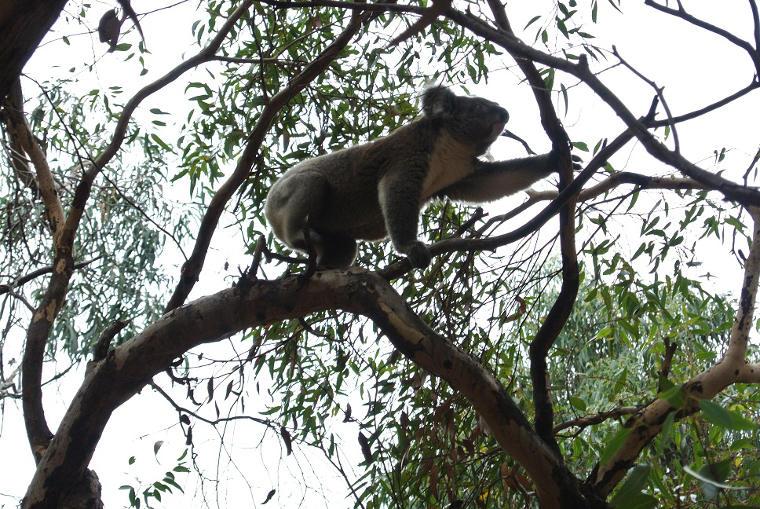 Erfahrungsbericht Mueller van Ishem Koala