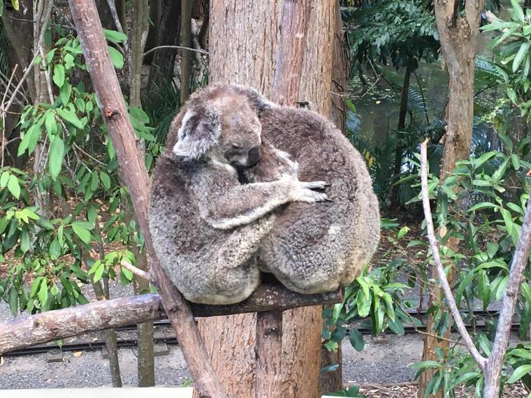 Erfahrungsbericht Vordermeier Koala